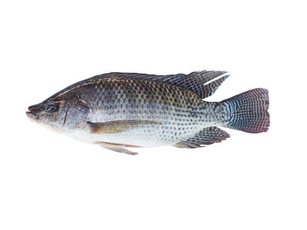 দেশি তেলাপিয়া মাছ